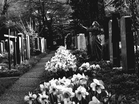 Flores blancas en el cementerio