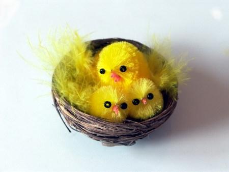 Buhitos o pollitos